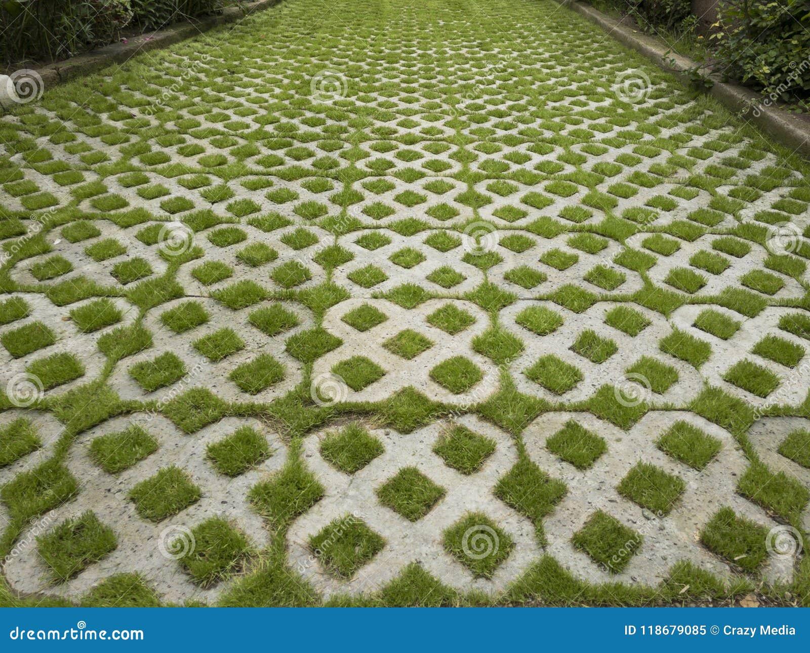 Erba che cresce attraverso il pavimento piastrellato immagine
