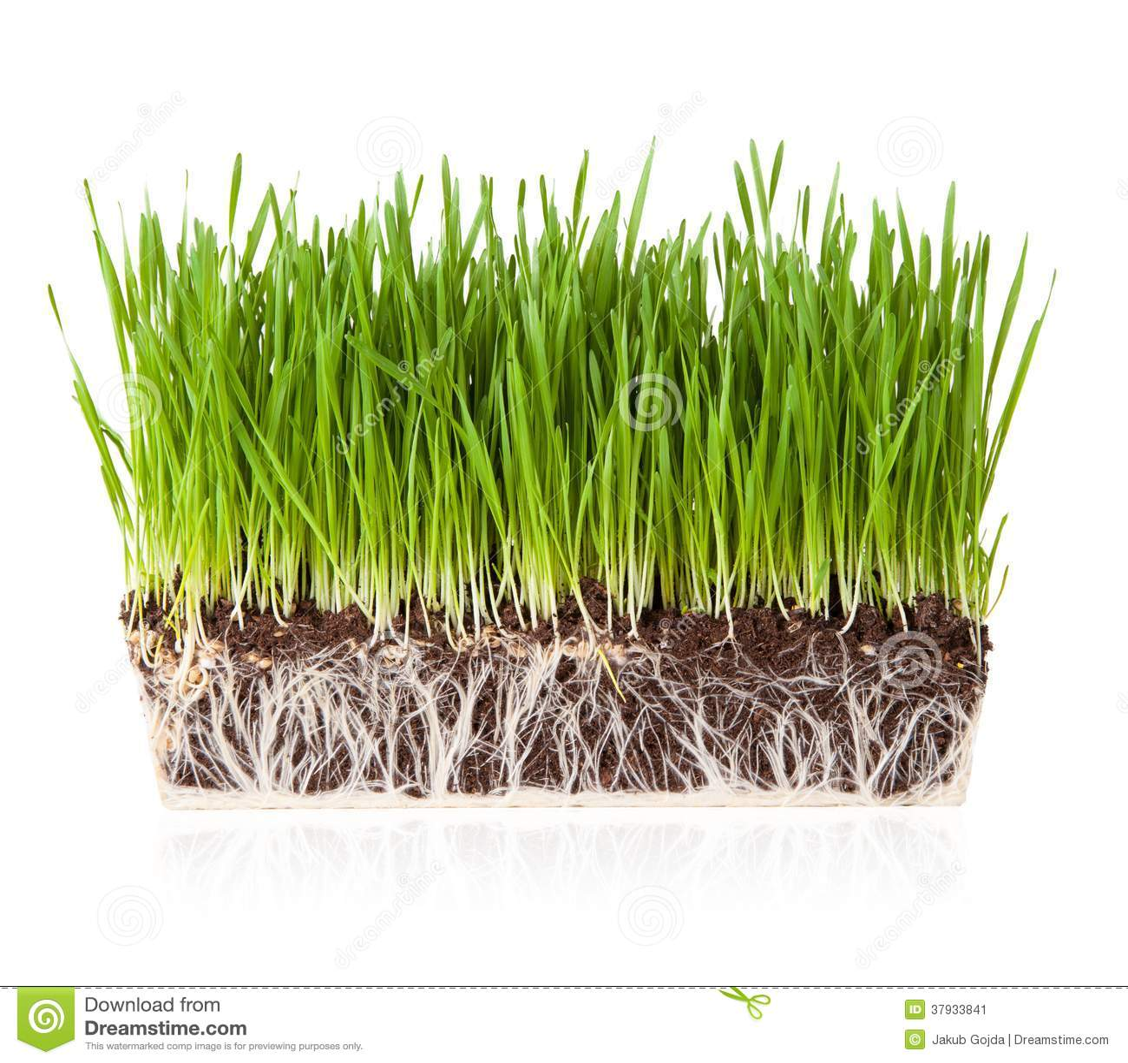 Erba con terra