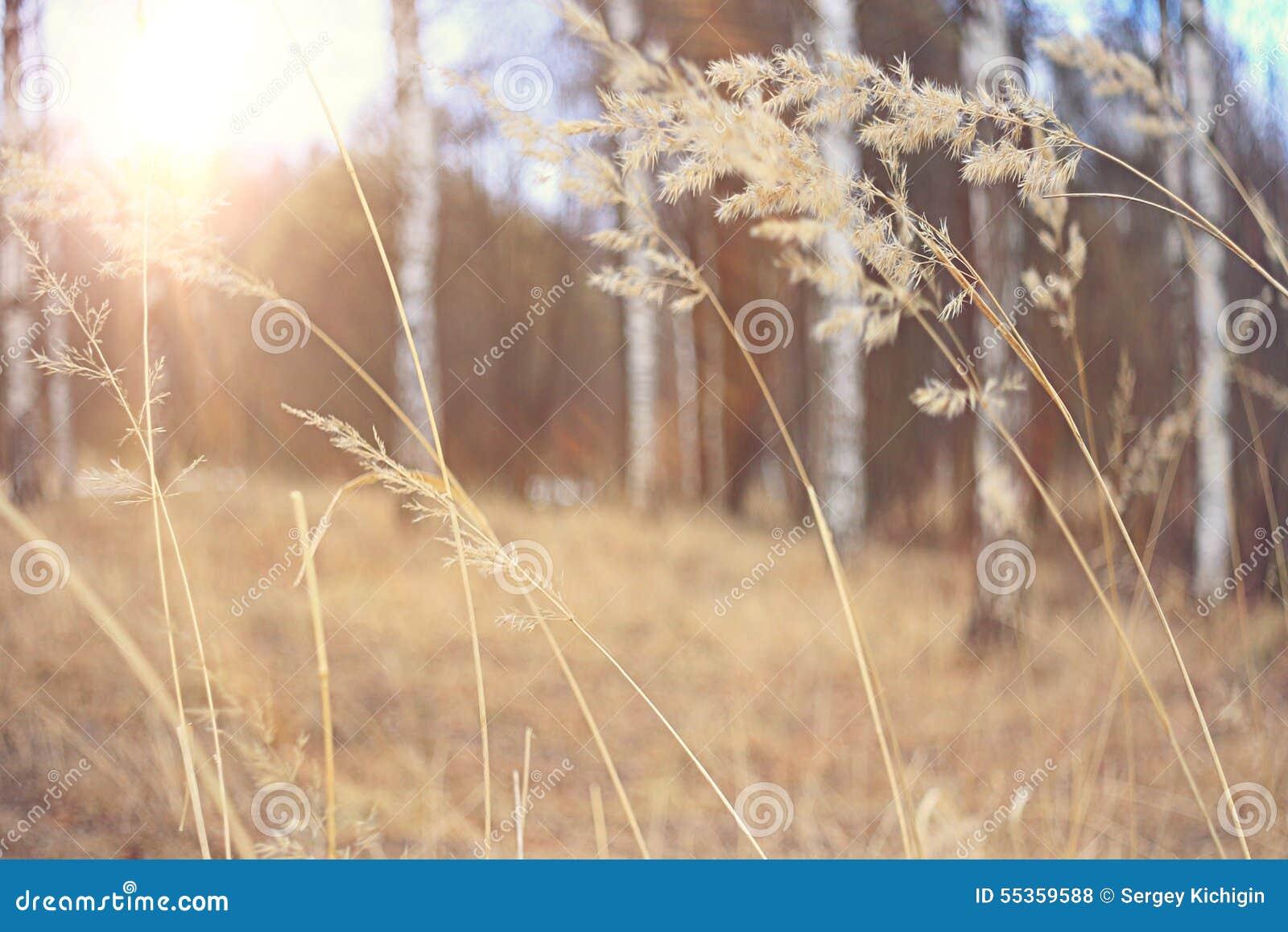 Erba di autunno al tramonto