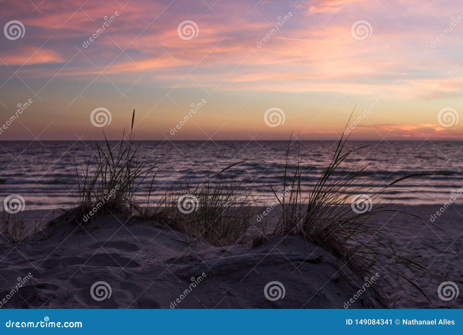 Erba in dune di sabbia