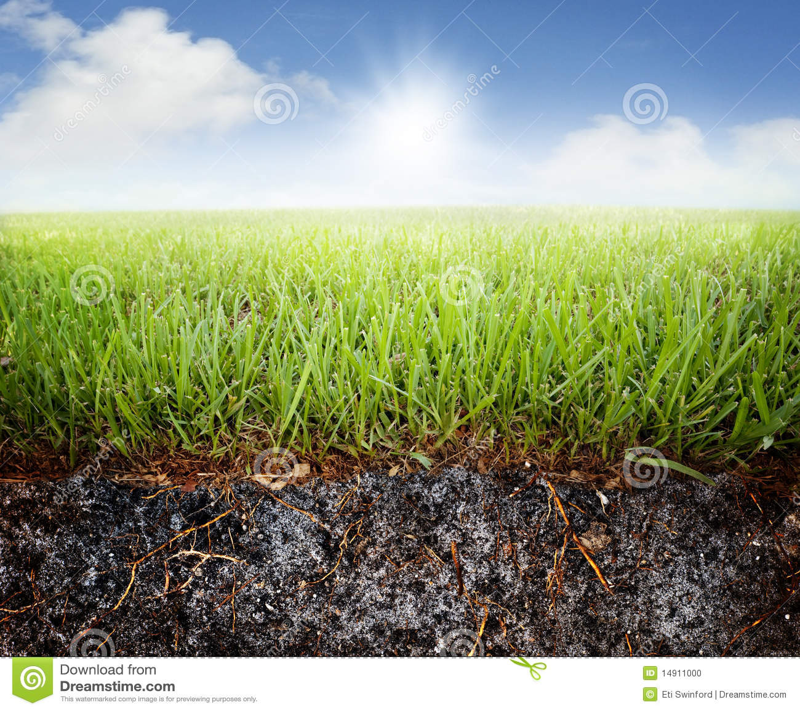 Erba e terreno