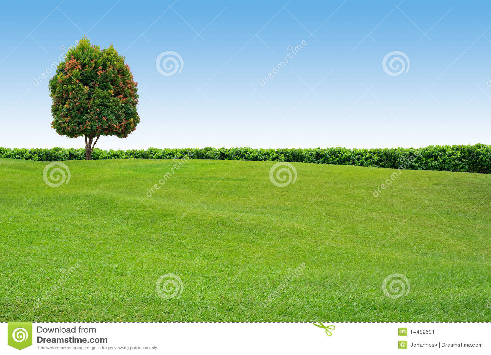 Erba ed albero sul cielo libero