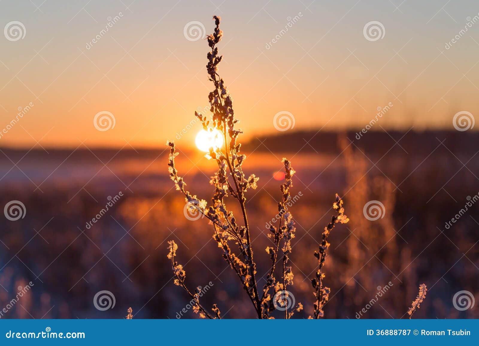 Download Erba Gelida Al Tramonto Di Inverno Immagine Stock - Immagine di bello, gelido: 36888787