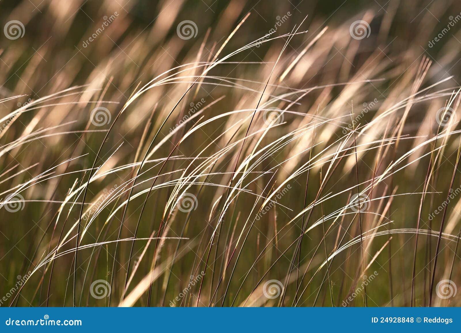 Erba nel vento