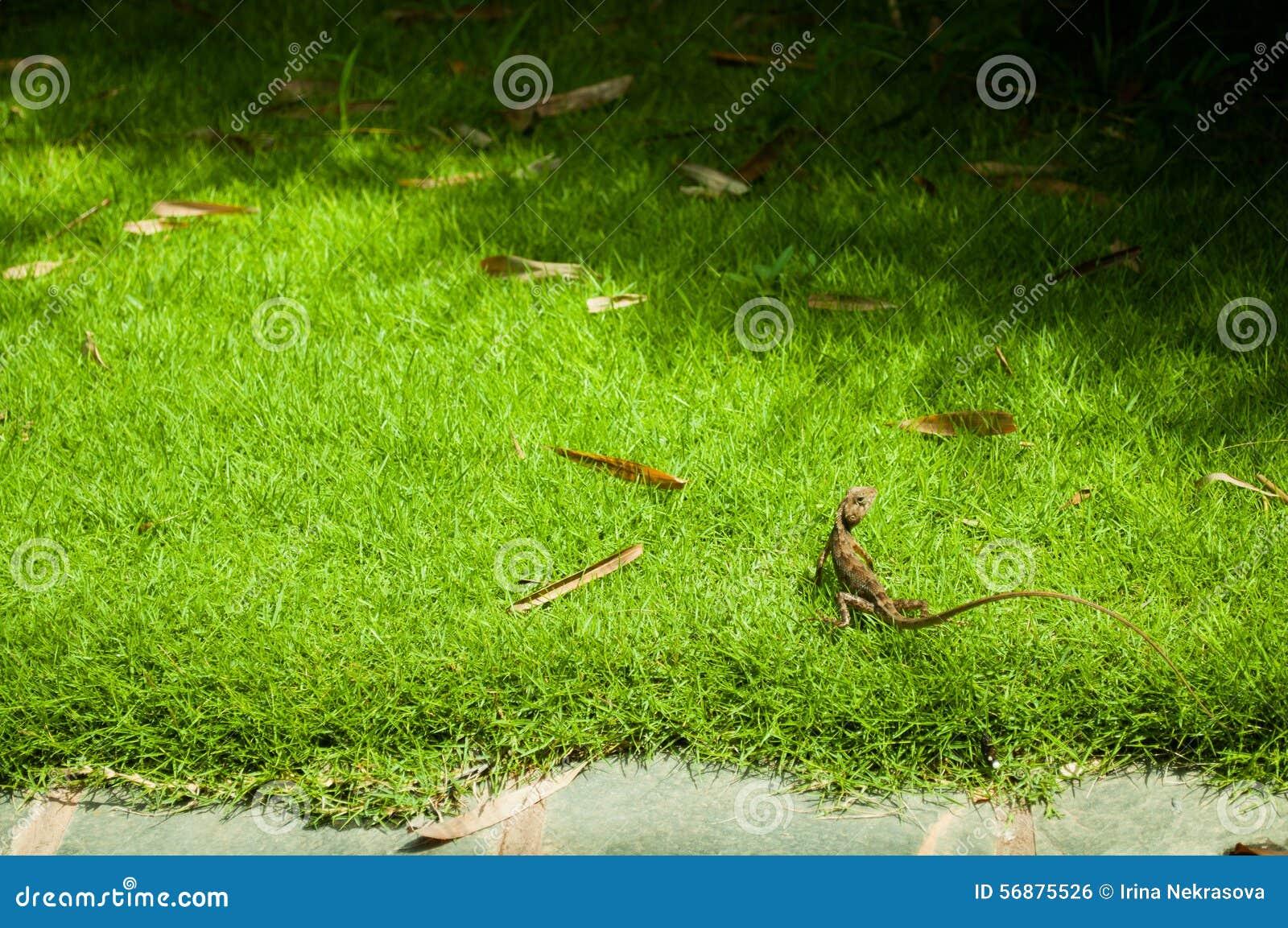 Erba verde con il paesaggio della lucertola