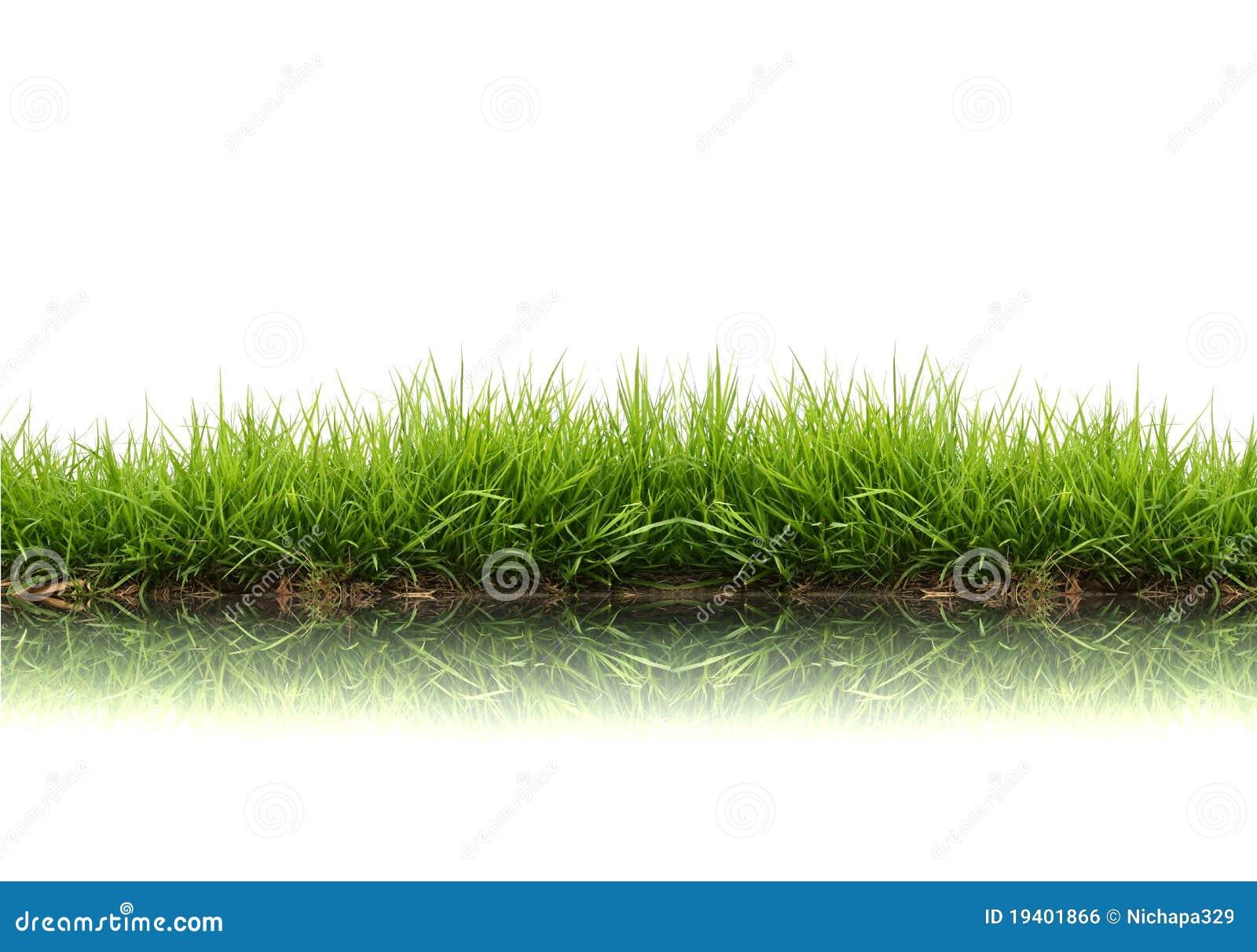 Erba verde della sorgente fresca