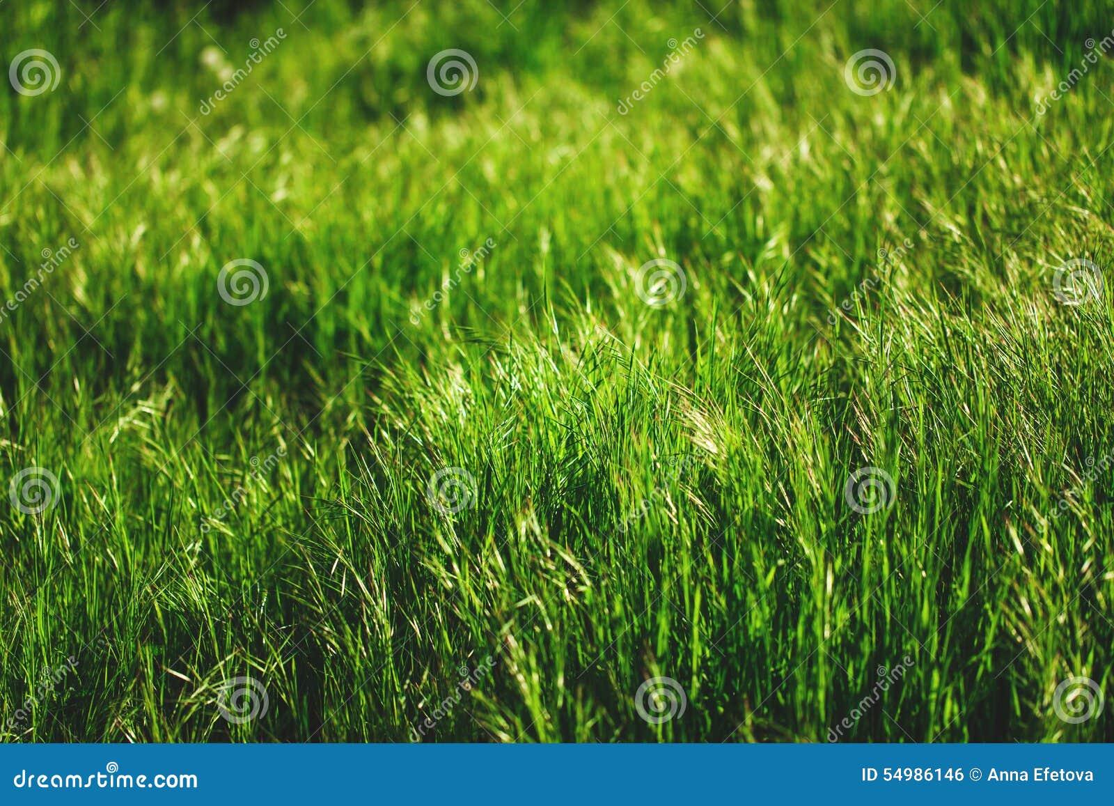 Erba verde fresca