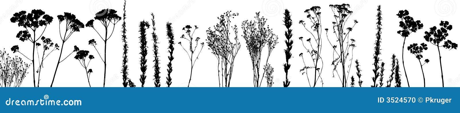 Erba, vettore della pianta