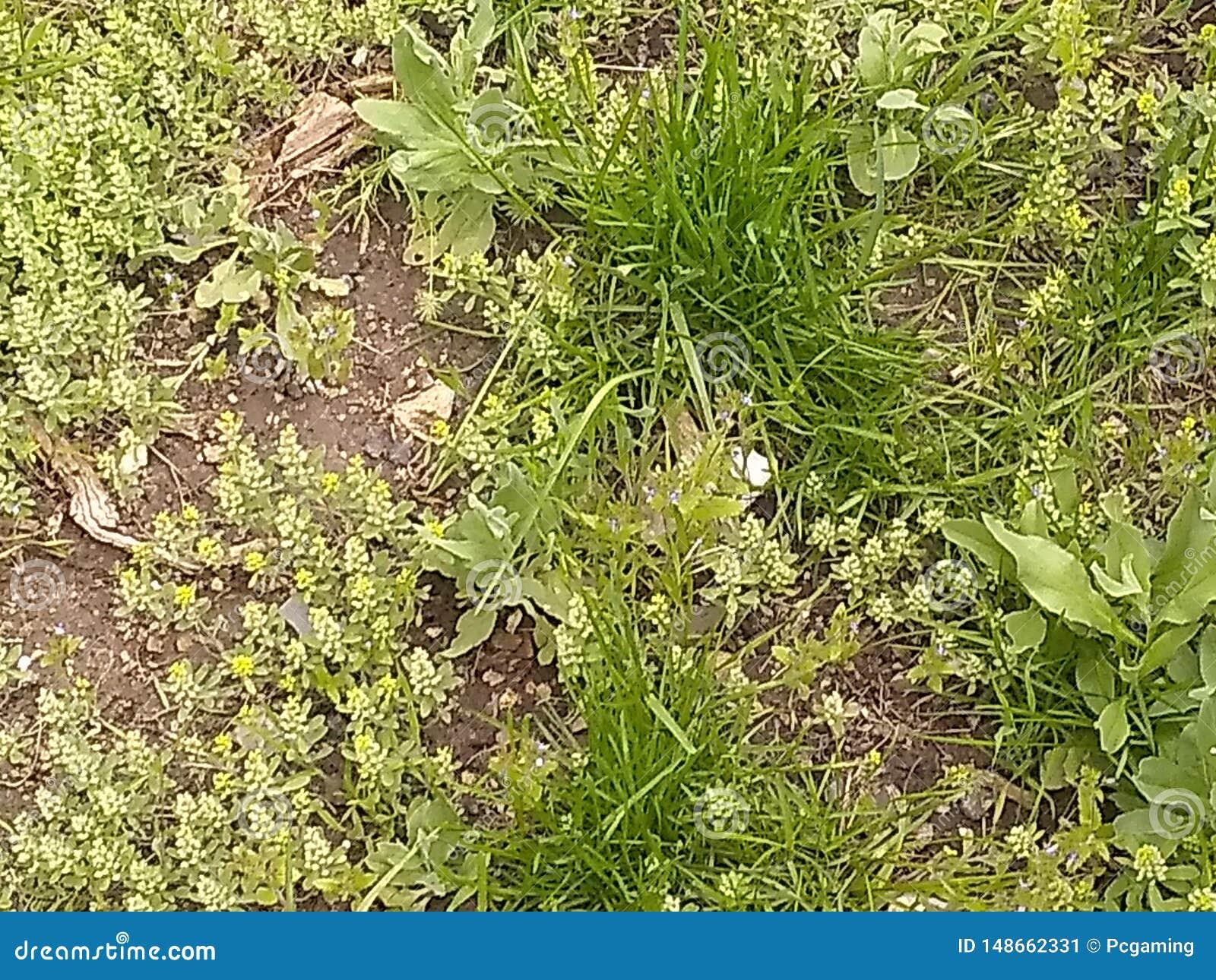 Erbacce e sporcizia dell erba