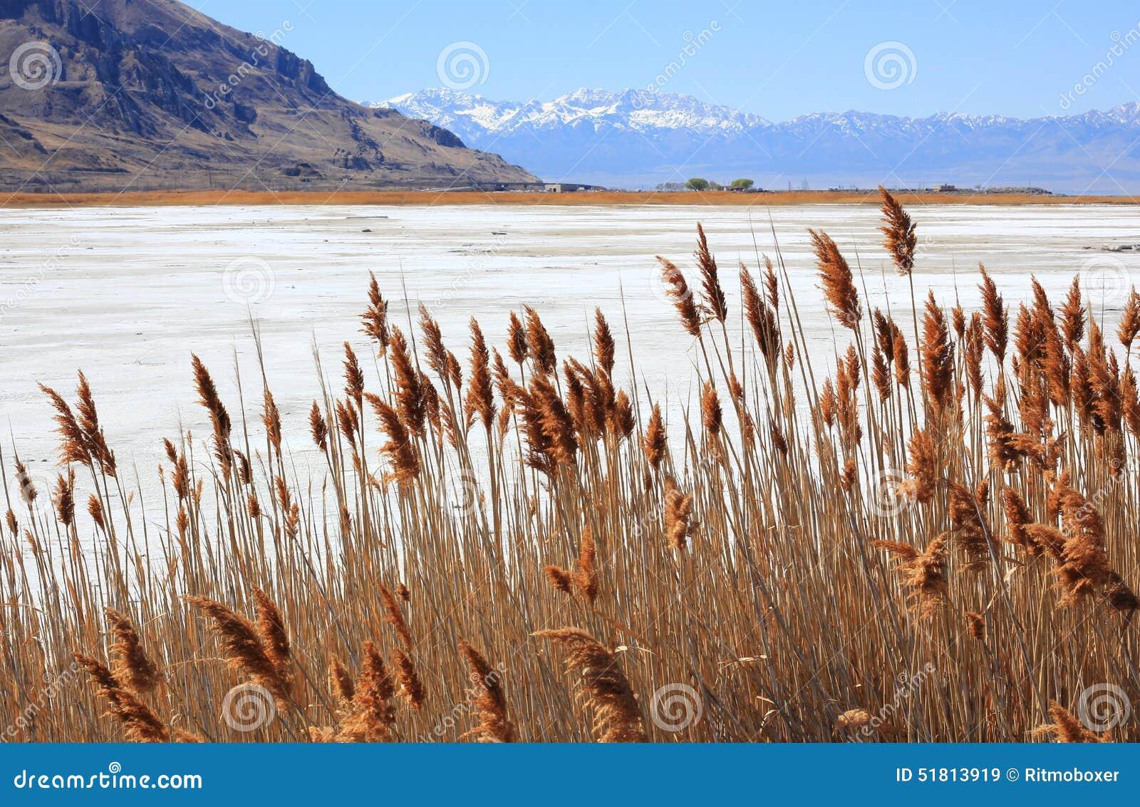 Erbe asciutte Gran Lago Salato nell Utah