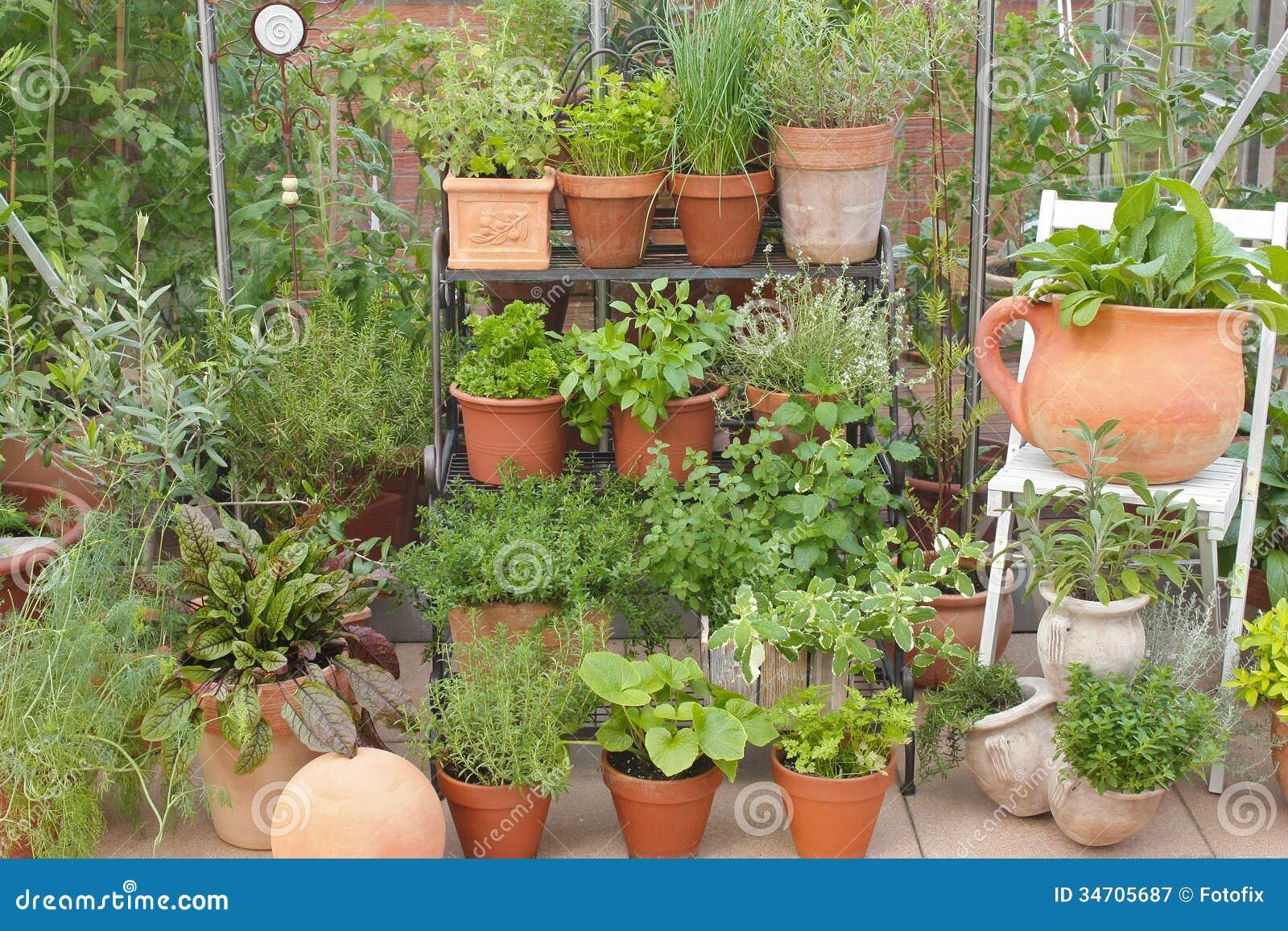 Erbe del giardino in vasi ed in serra immagine stock for Vasi erba