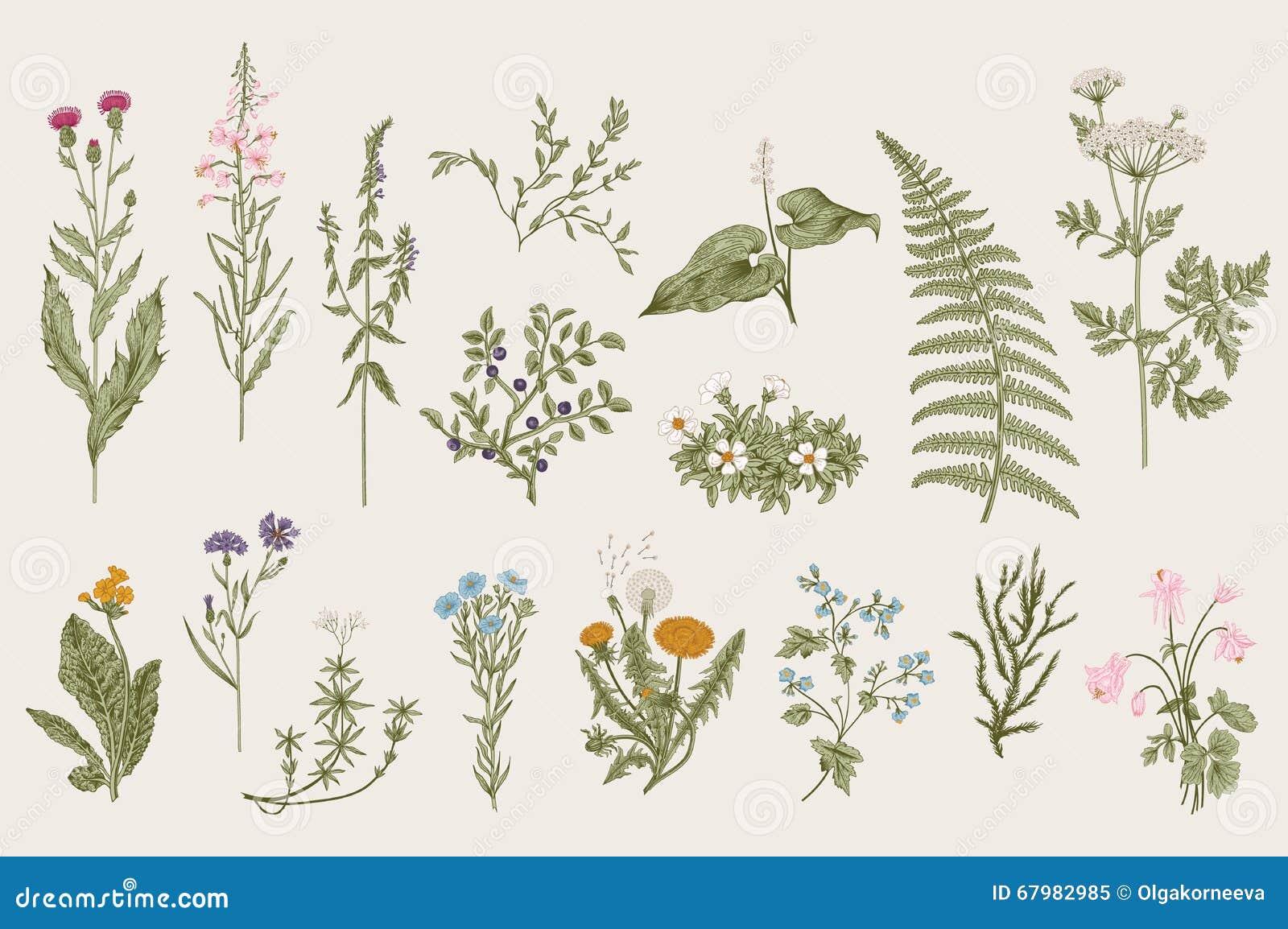 Erbe e fiori selvaggi botanica insieme