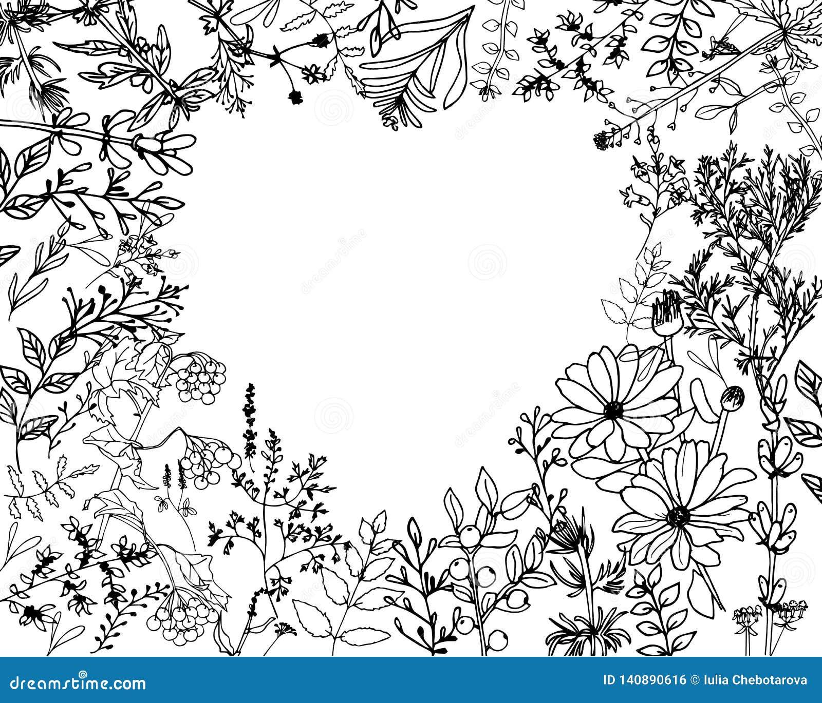 Erbe e floweres selvaggi Metta dei fiori della botanica