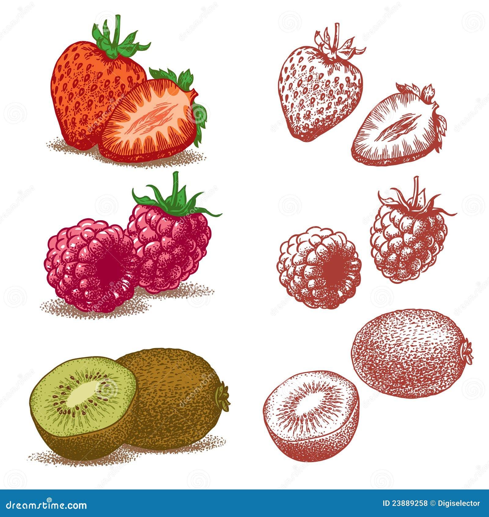 Erdbeere, Himbeere und Kiwi