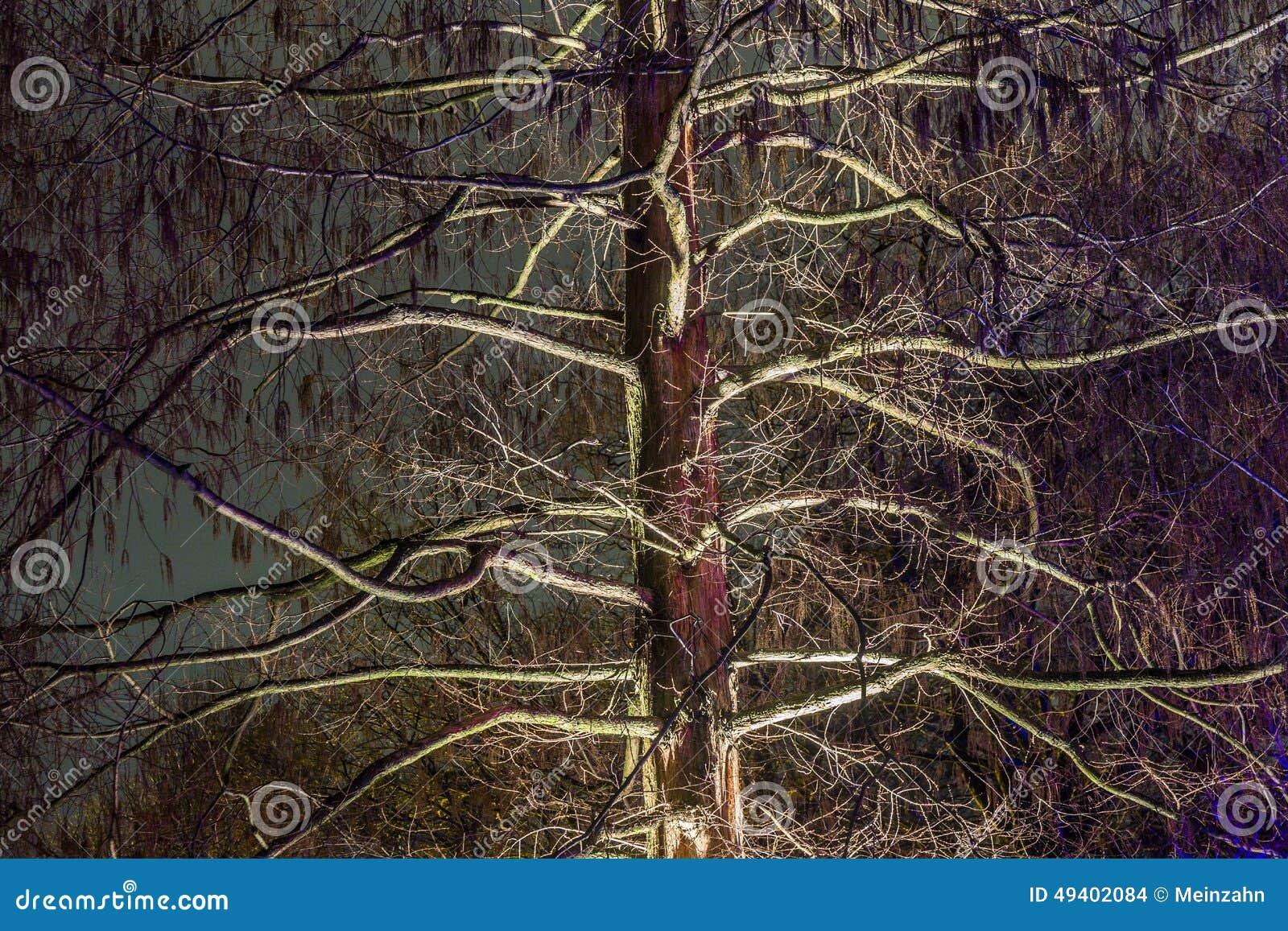 Download Ereignis Winterlichter Im Palmgarden Redaktionelles Stockbild - Bild von ablichtung, tropisch: 49402084