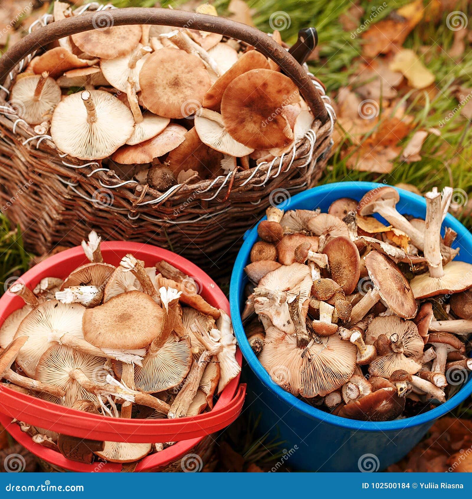 Erfolgreiche Pilzjagd im Herbstwald