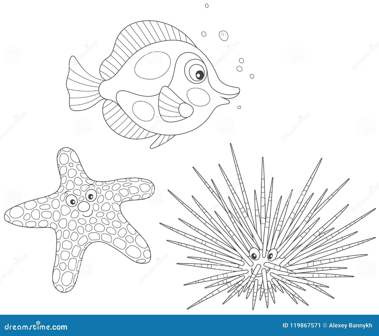 Erizo De Mar Estrellas De Mar Y Pescados Ilustración Del Vector
