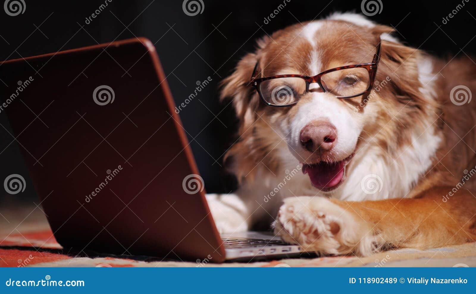 Ernster Hundgeschäftsmann, der mit einem Laptop arbeitet lustiges Tierkonzept