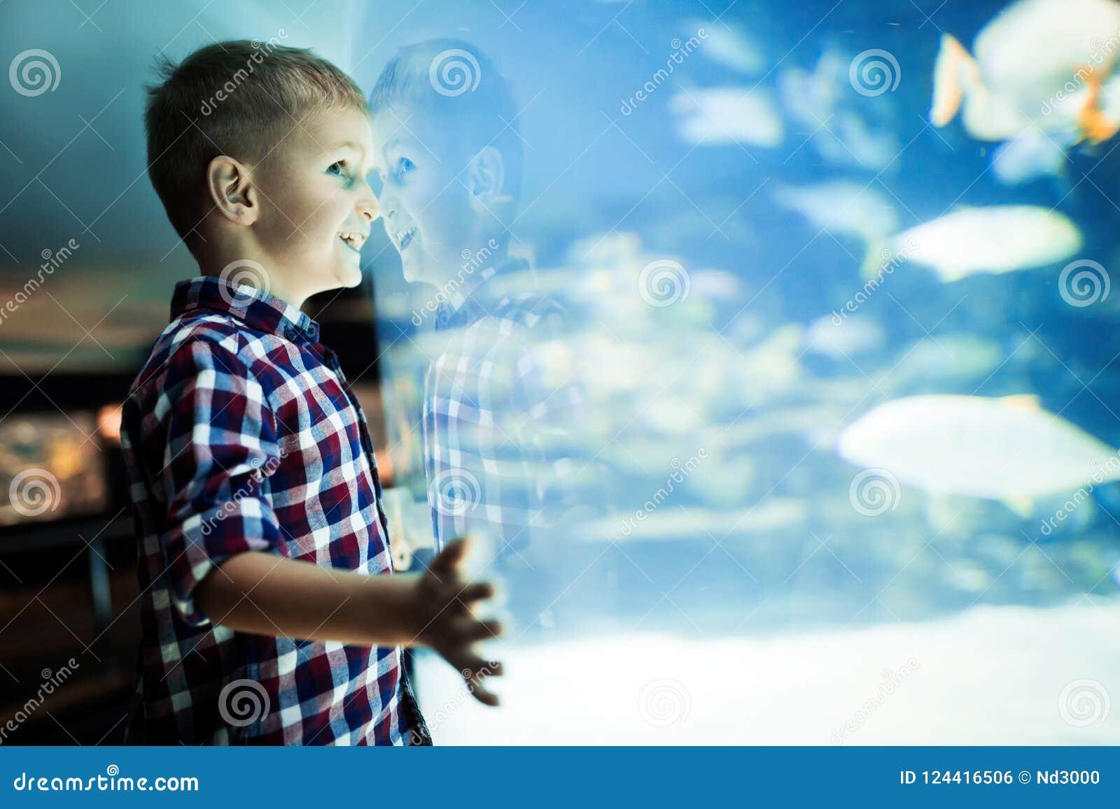 Ernster Junge, der im Aquarium mit tropischen Fischen schaut