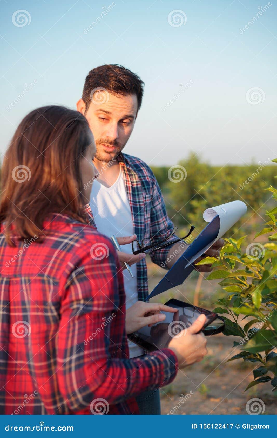 Ernstige jonge mannelijke en vrouwelijke agronomen of landbouwers die in een fruitboomgaard werken De vrouw gebruikt een tablet,