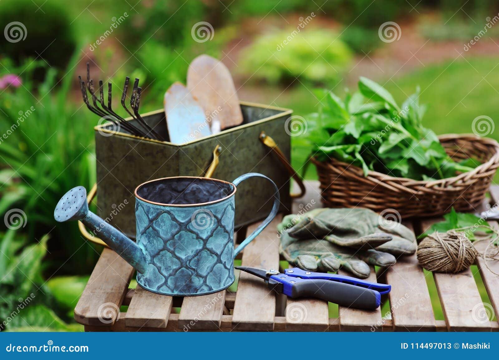 Ernte der frischen organischen Minze von eigenem Garten Sommer gardenwork auf Bauernhof
