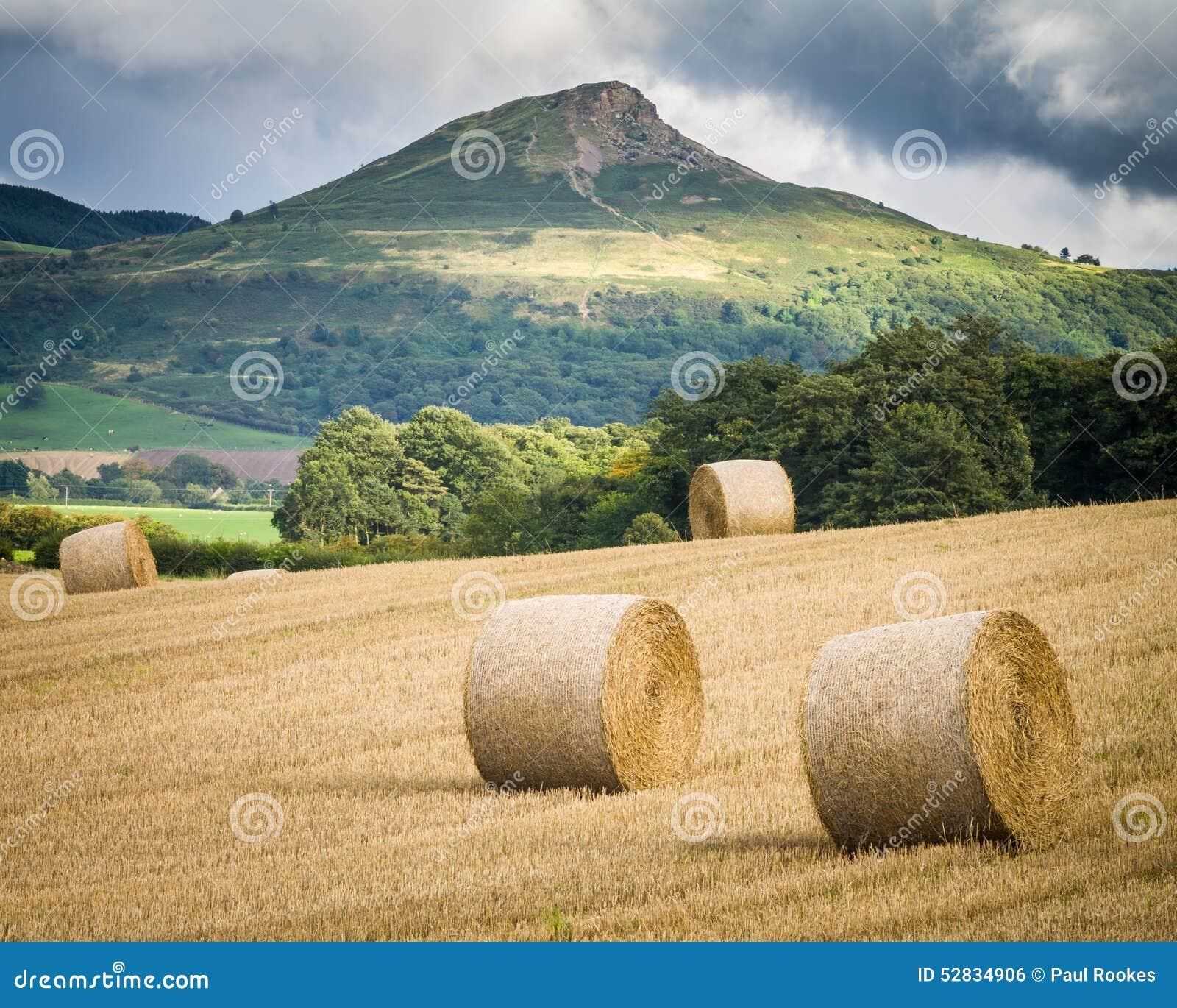 Ernte - North Yorkshire - Großbritannien