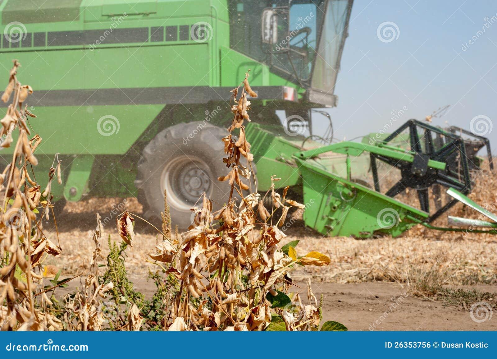 Ernten der Soyabohnen