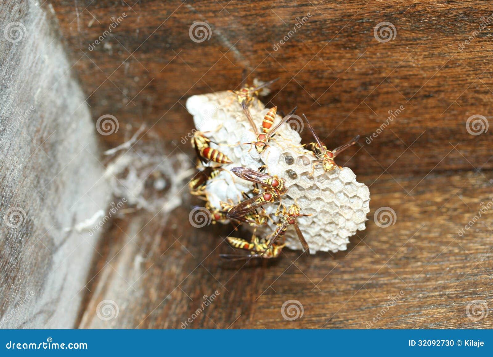 erschreckende stechende insekten stockfoto bild 32092730. Black Bedroom Furniture Sets. Home Design Ideas