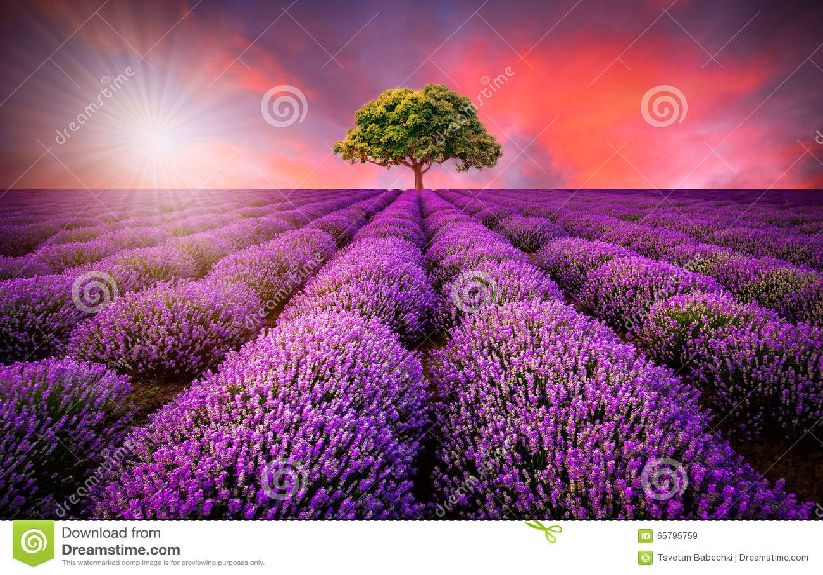 Erstaunliche Landschaft mit Lavendelfeld bei Sonnenuntergang