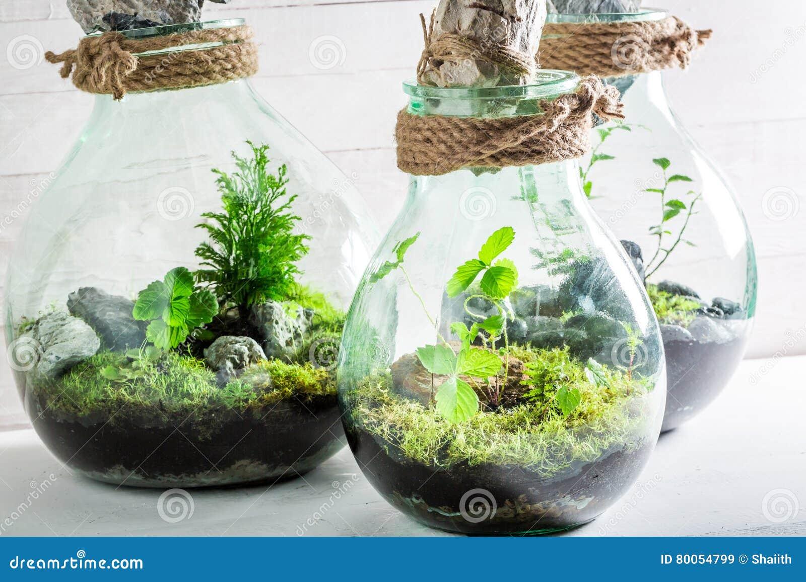 Erstaunliche Lebende Pflanzen In Einem Glas Mit Selbstökosystem