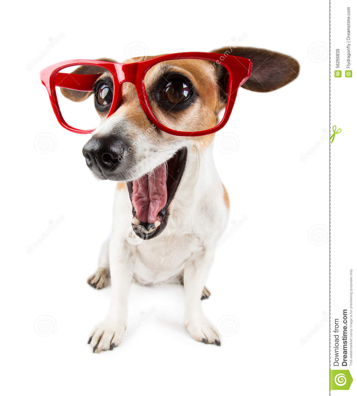 Funny Dog Video Montage