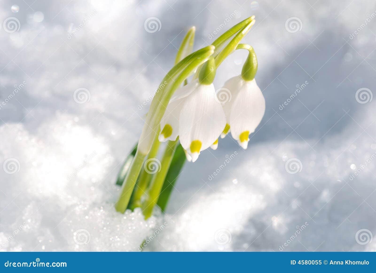 Erste Blumen Stockbild Bild Von Vegetation Wald Blatt 4580055