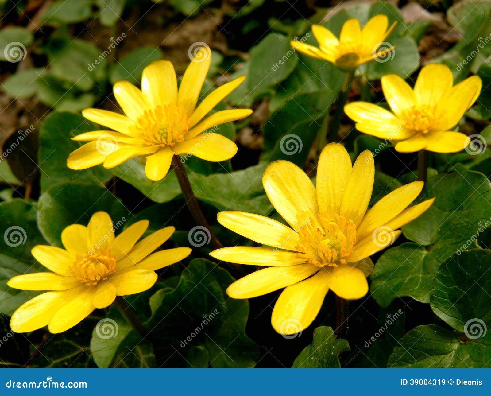 Erste Fruhlingsblumen Stockbild Bild Von Staubgefass 39004319