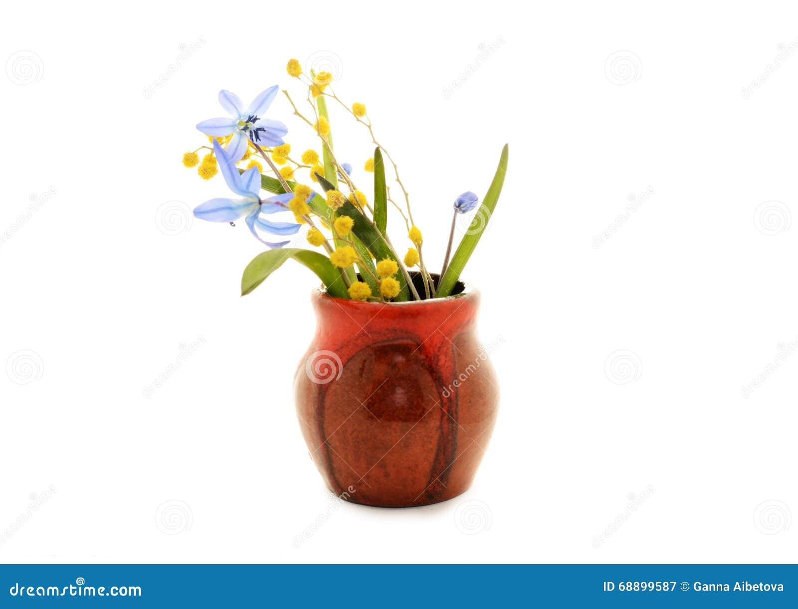 erste fr hlingsblumen blaue schneegl ckchen und mimose im topf stockfoto bild 68899587. Black Bedroom Furniture Sets. Home Design Ideas