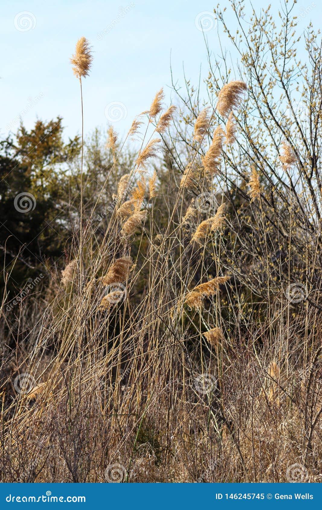 Ervas daninhas frescas na floresta pelo rio