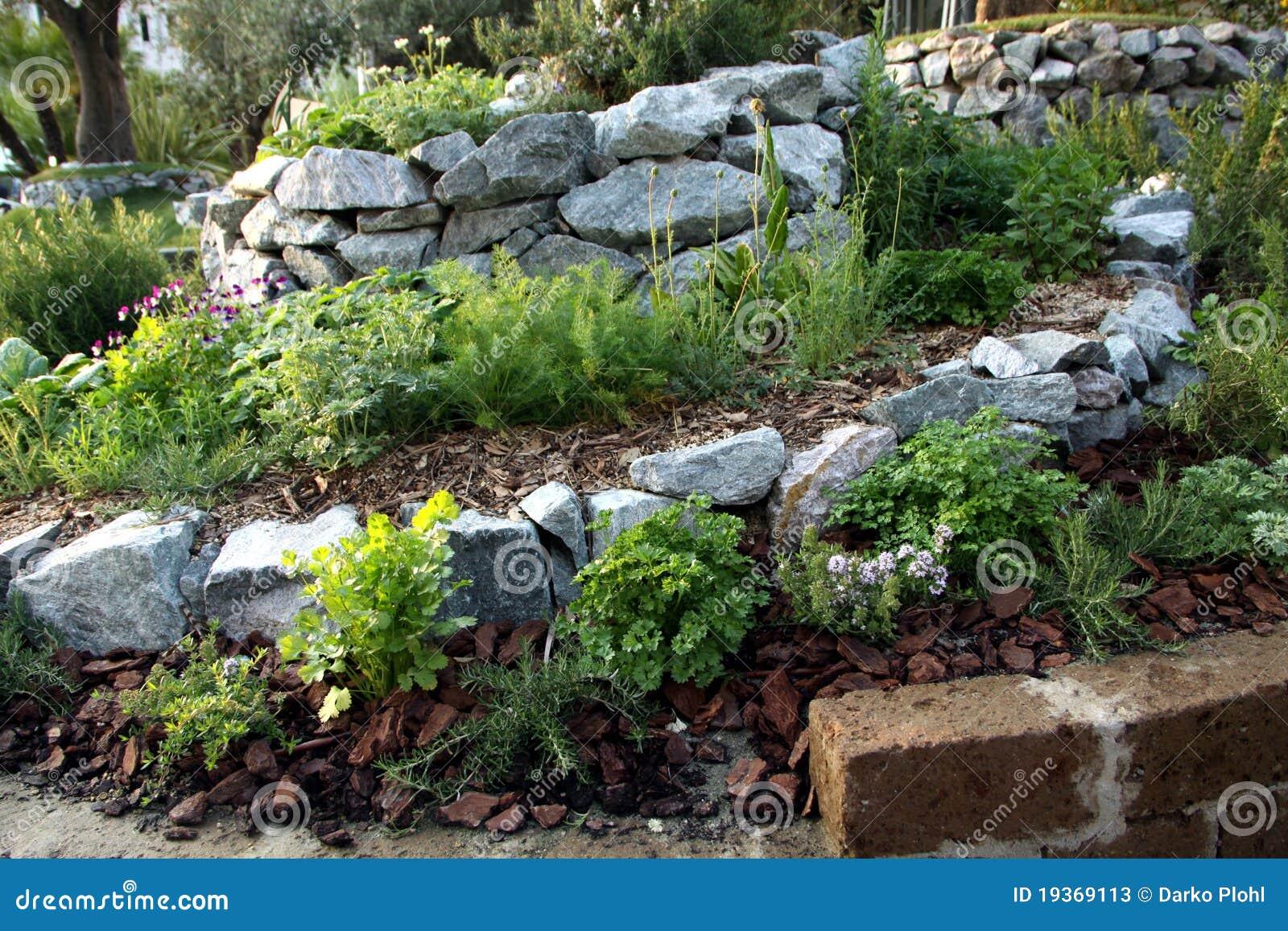 Ervas e cama aromática do jardim das plantas