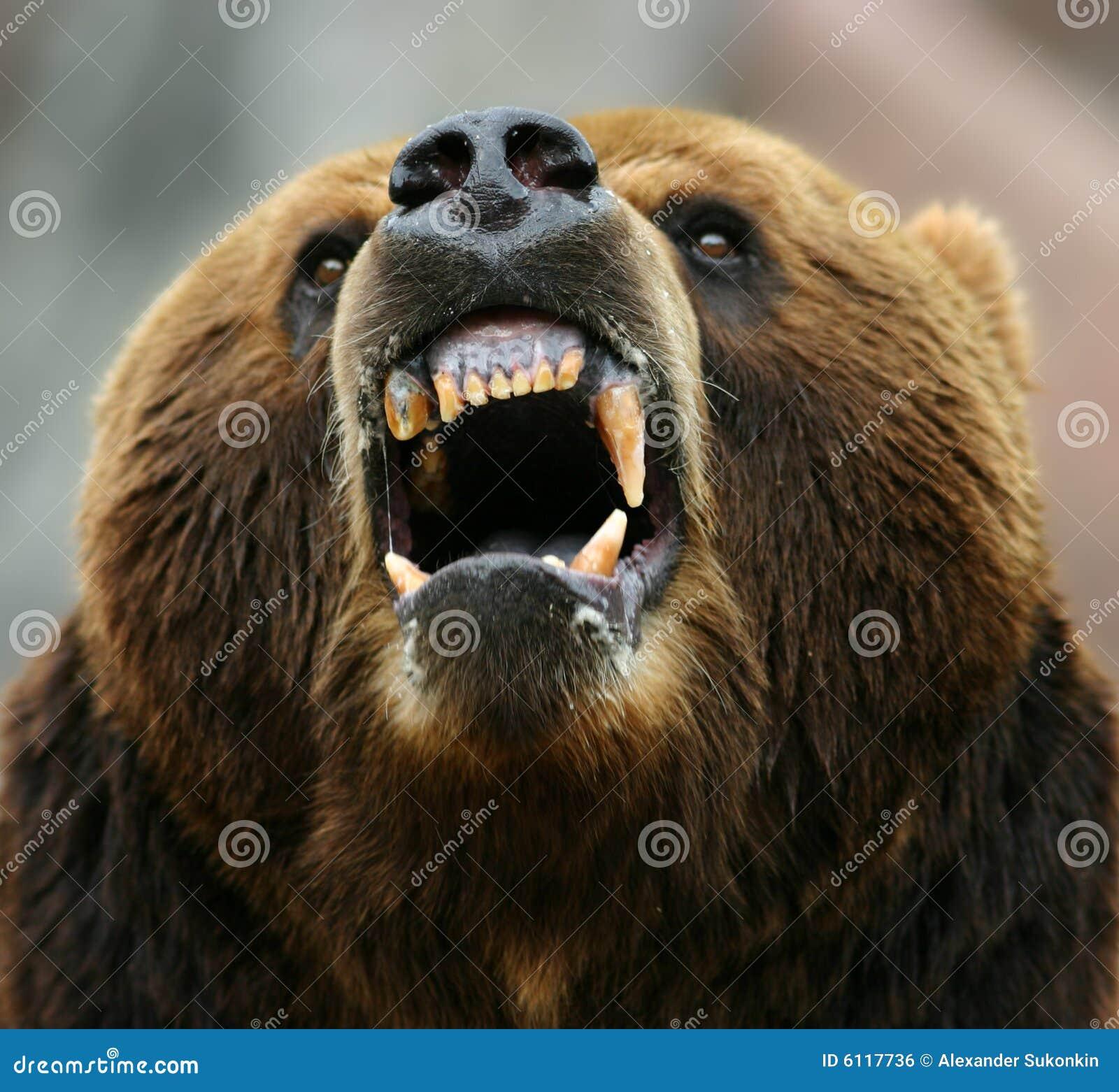 Erzürnter brauner Bär