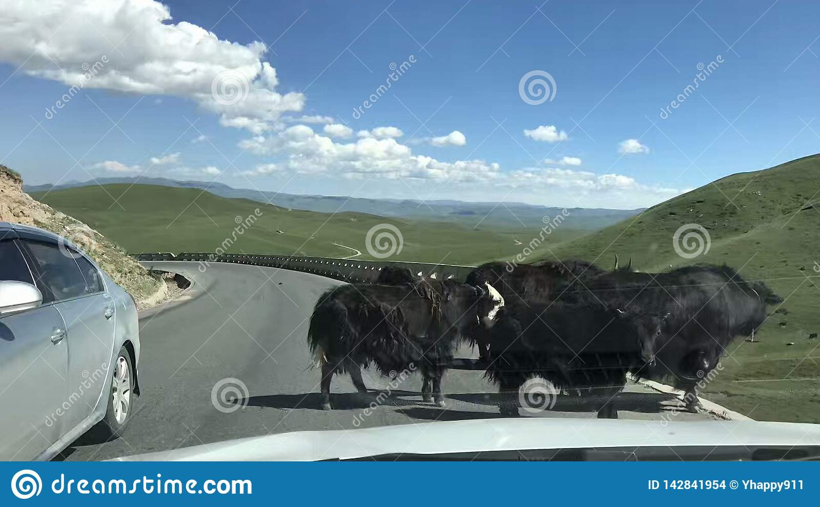 Es gibt einige Yak vor uns im endlosen Grasland