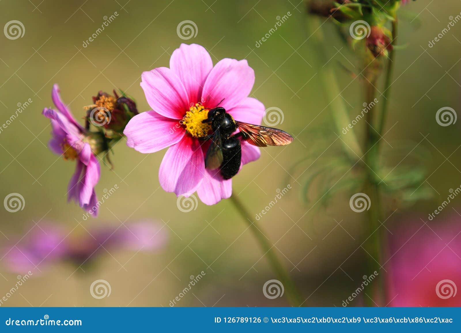 Es ist in voller Blüte mit schönen persischen Blumen im Park