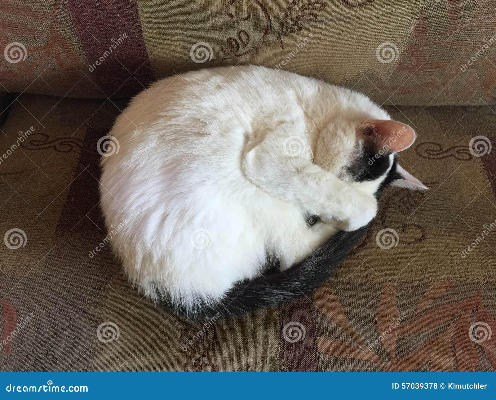 es ist zu hell stockfoto bild von hell schlafen bedeckung 57039378. Black Bedroom Furniture Sets. Home Design Ideas