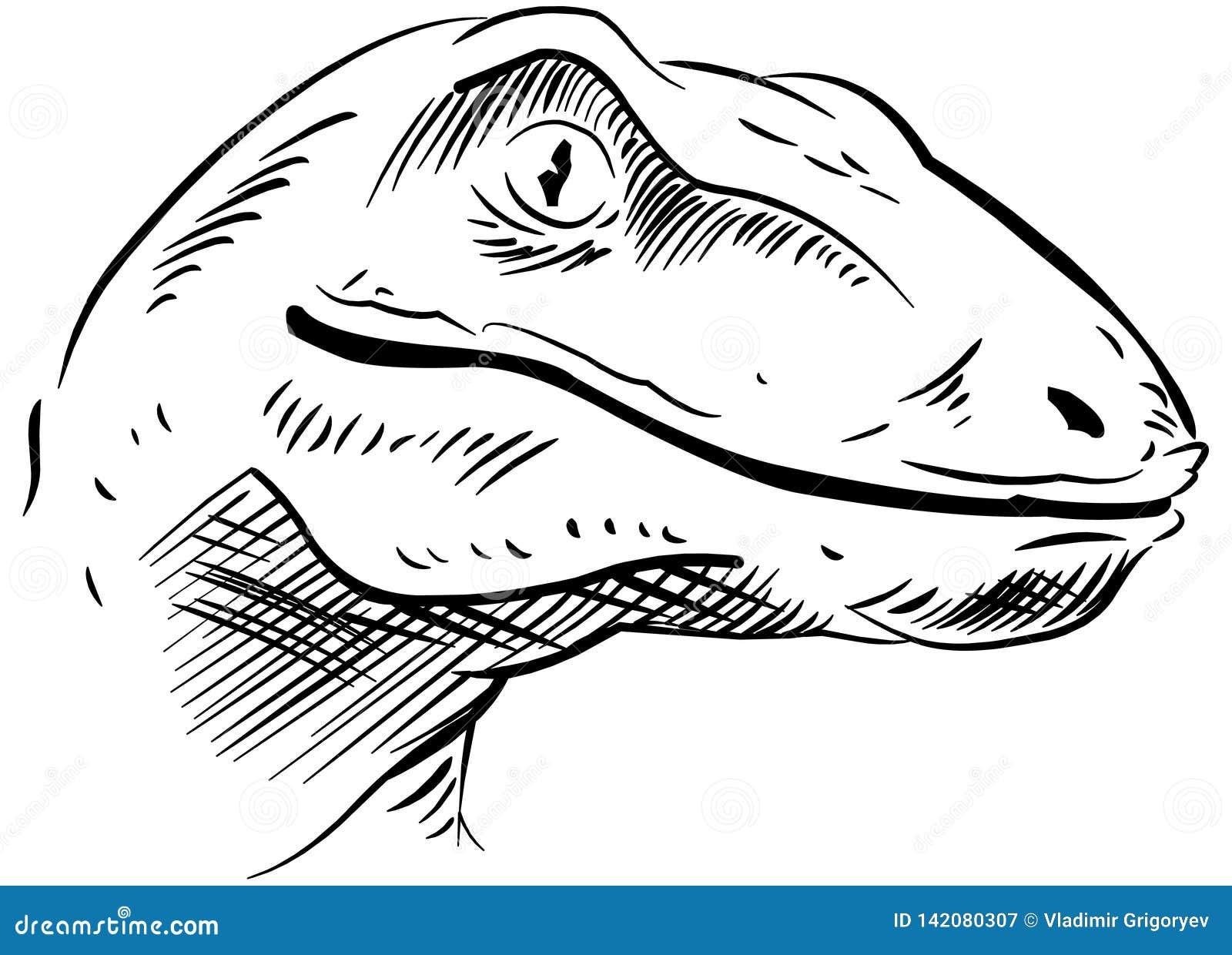 Esboço da cabeça do dinossauro