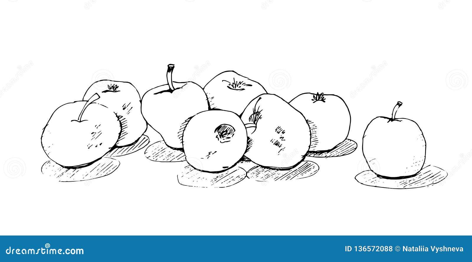 Esboce maçãs suculentas a mão livre, deliciosas com sombra