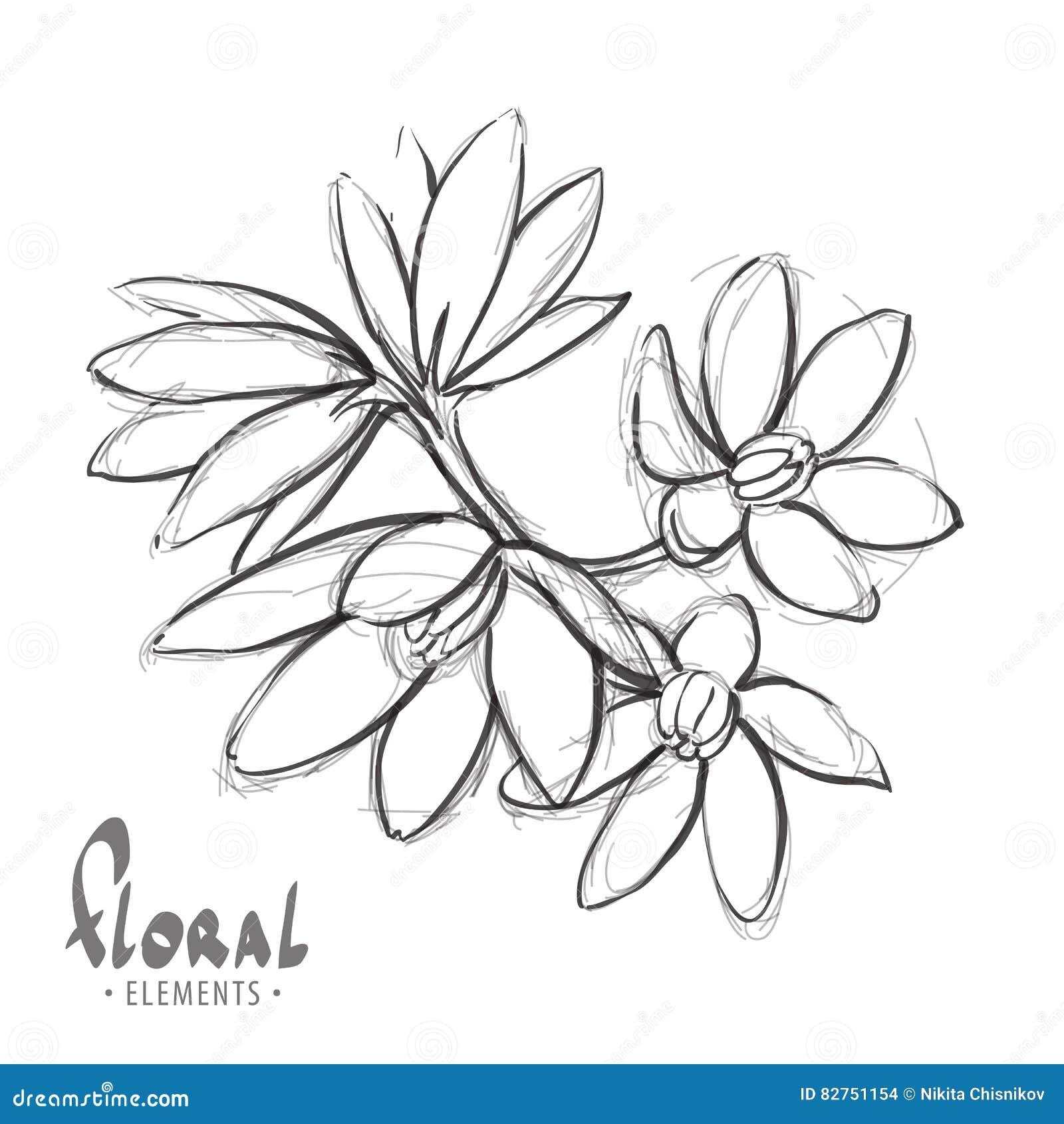 Esboce Uma Flor Delicada Ilustracao Do Vetor Ilustracao De