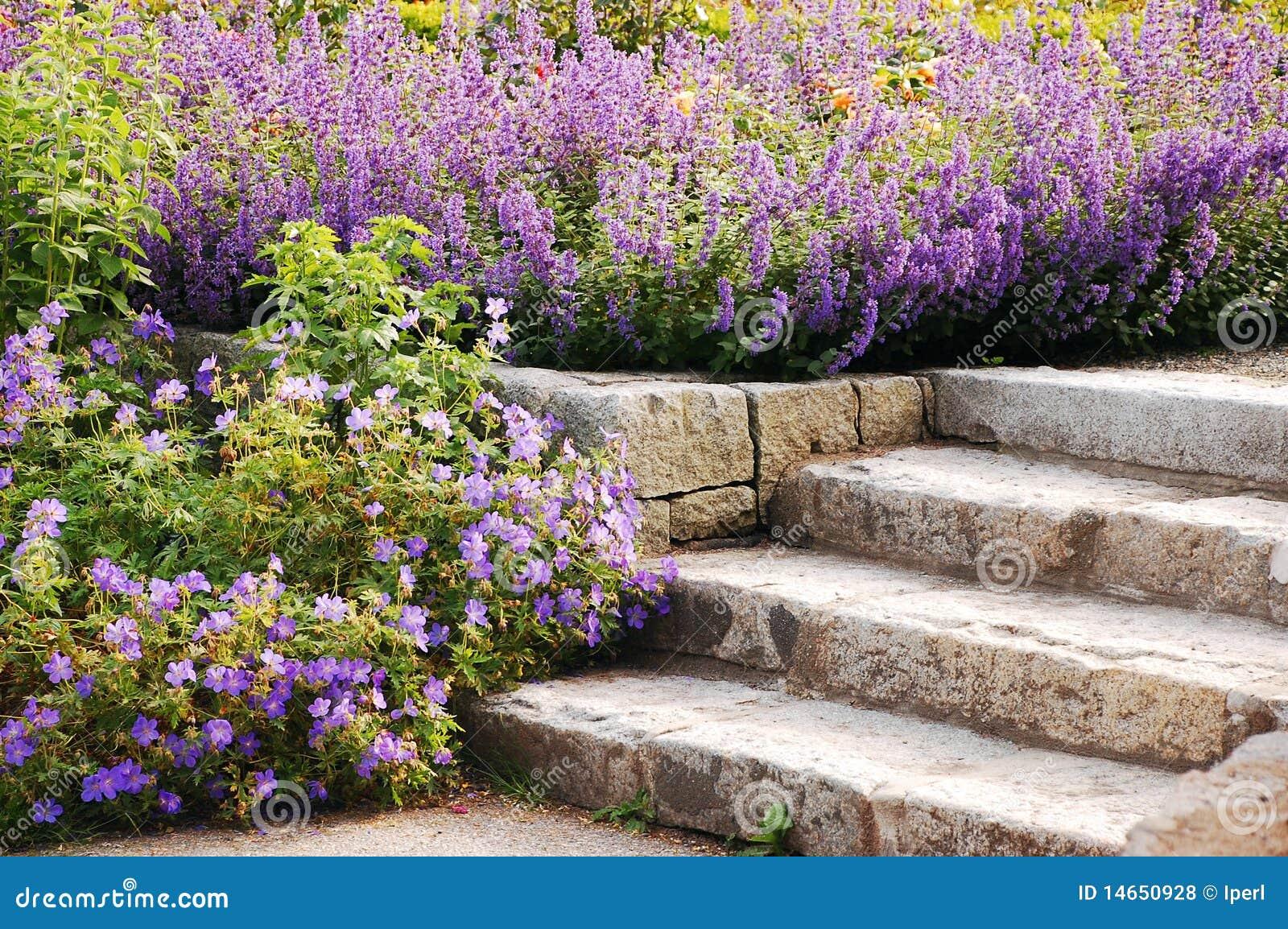escada de pedra no jardim:escadas de pedra do jardim cercadas por flores roxas mr no pr no 3