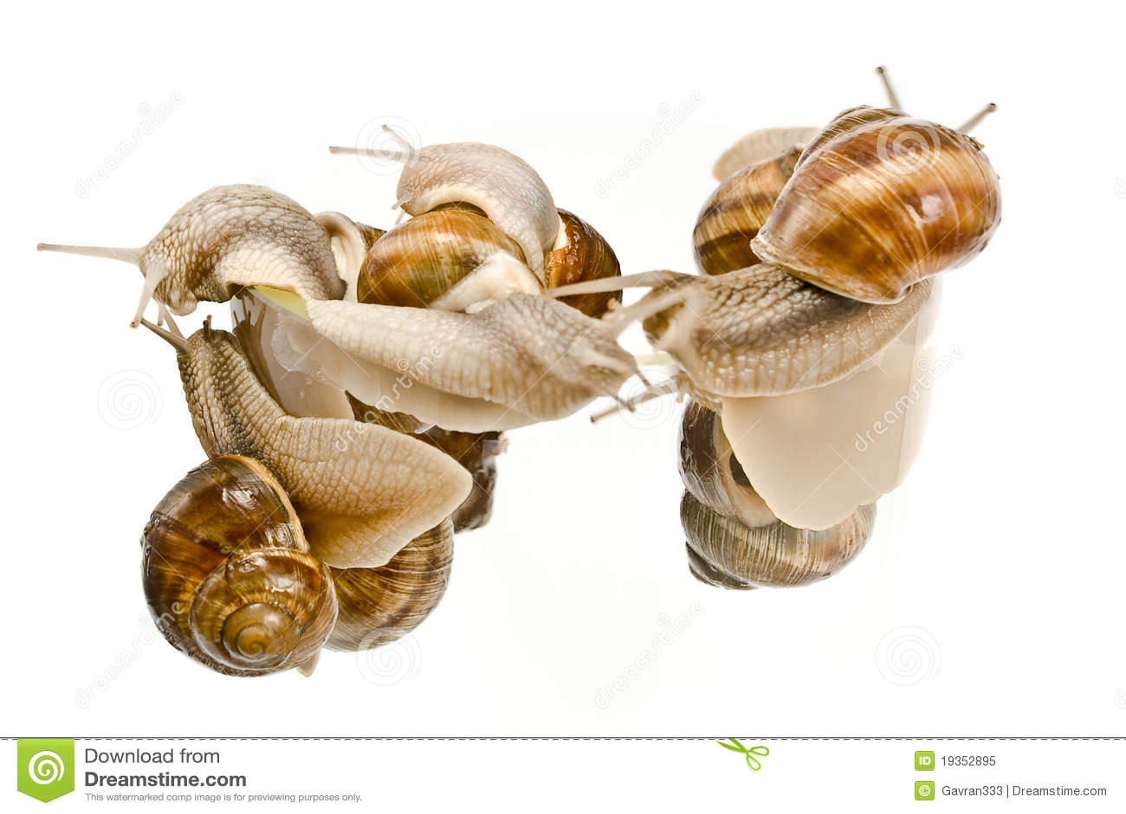 Escalada dos caracóis