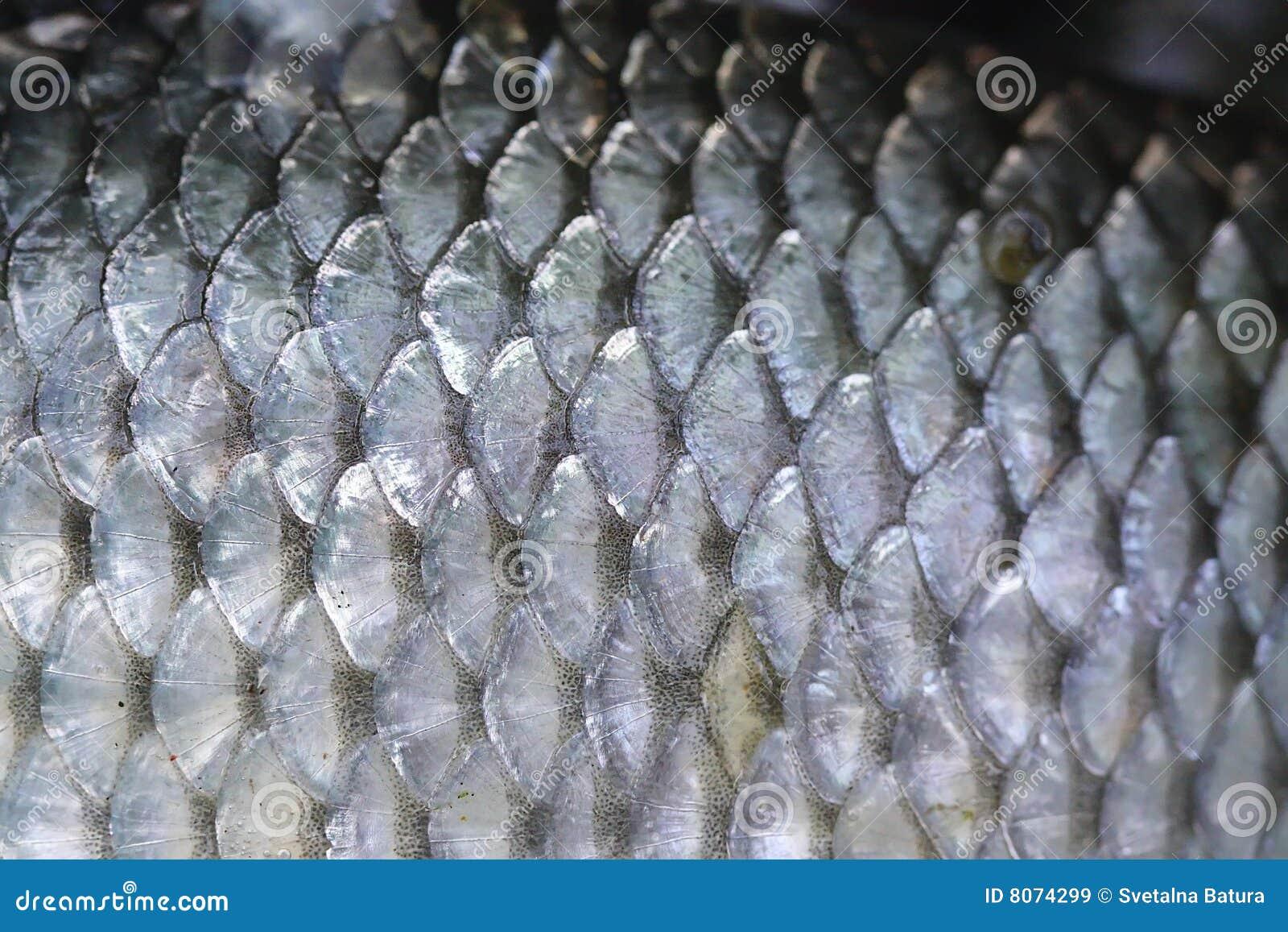 Escalas de peixes