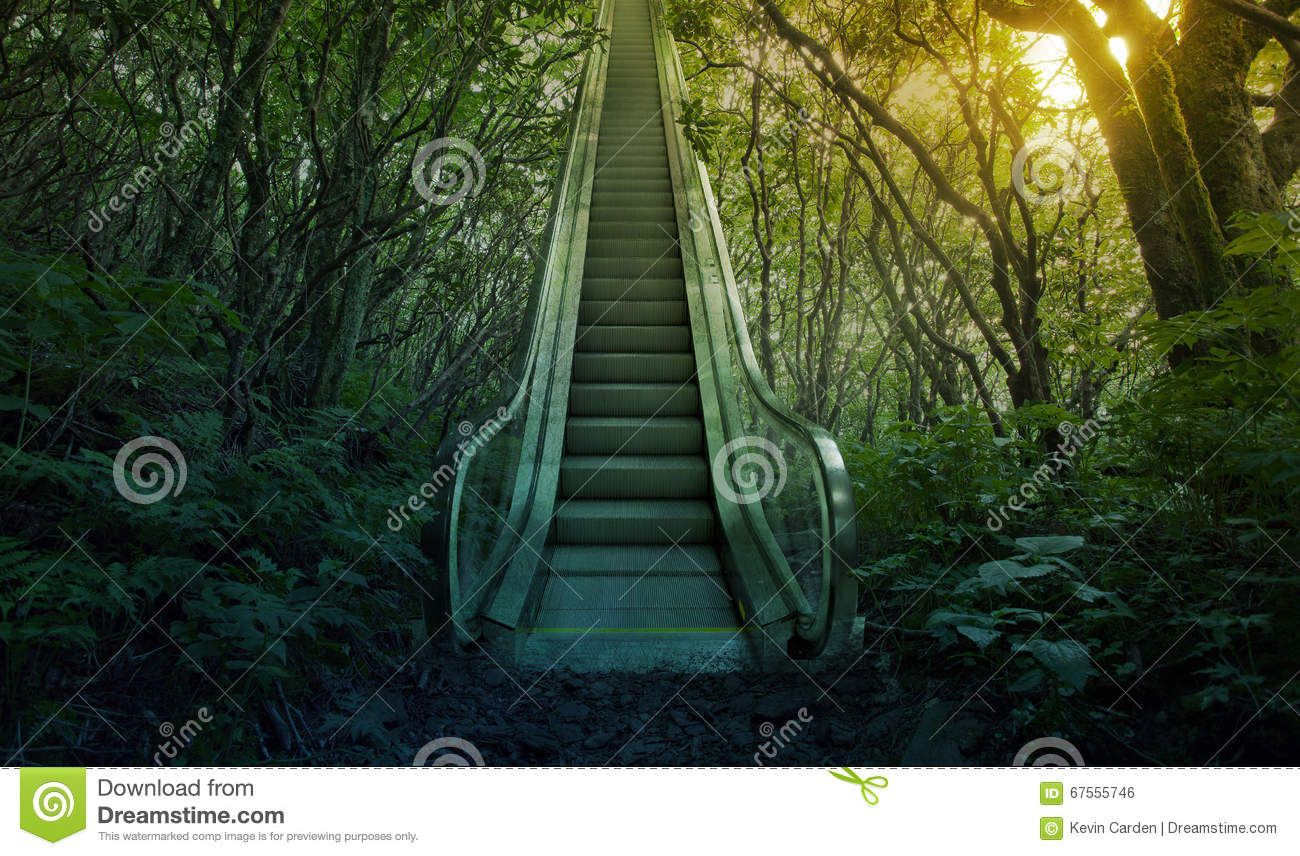 Escalator in the forest