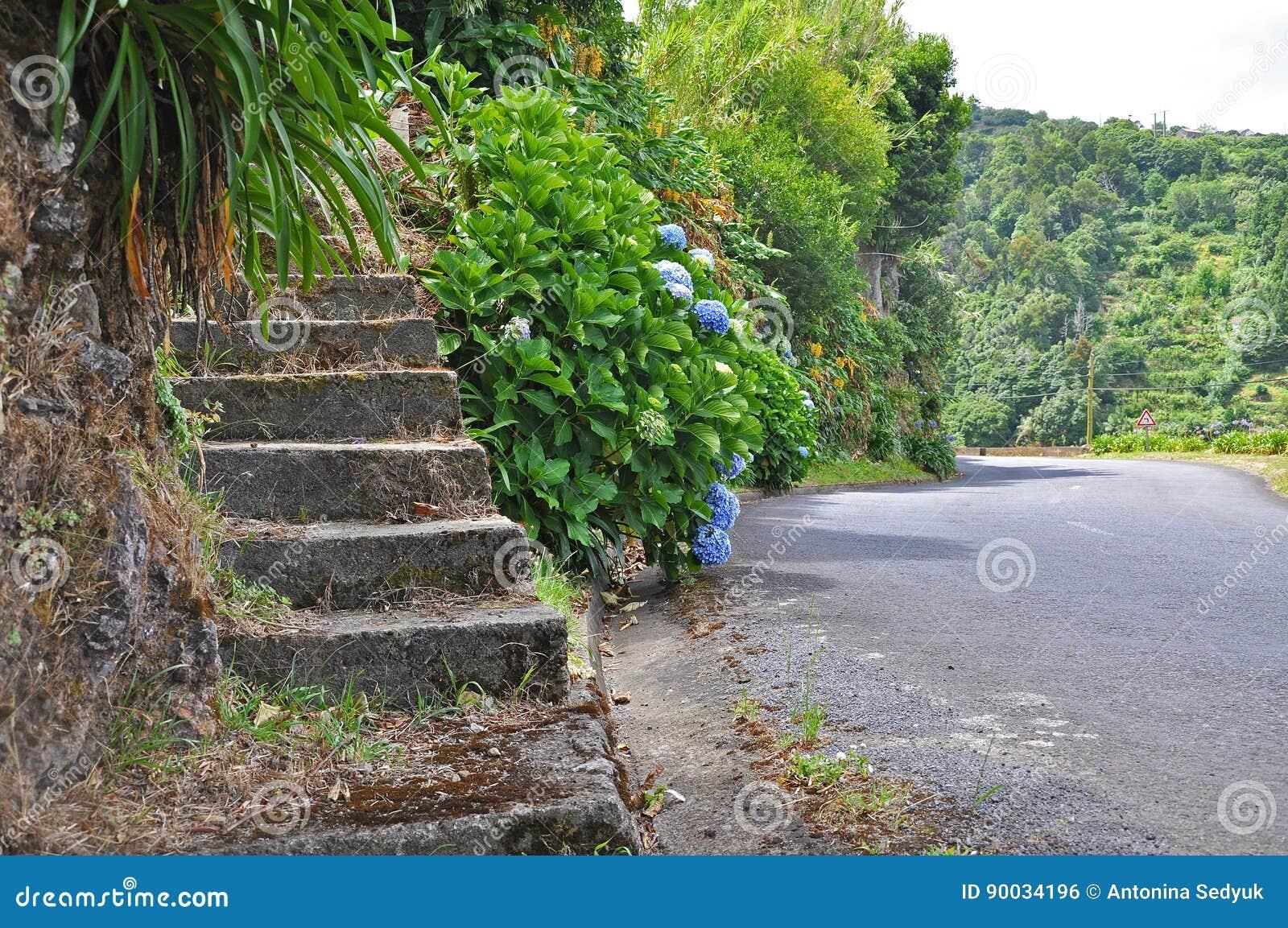 Escalera de piedra del camino