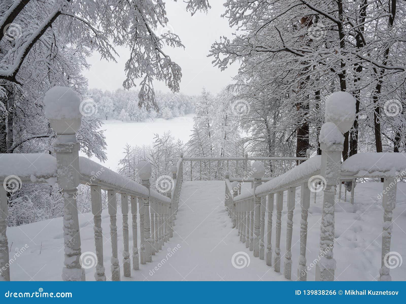 Escalera nevada en el bosque del invierno