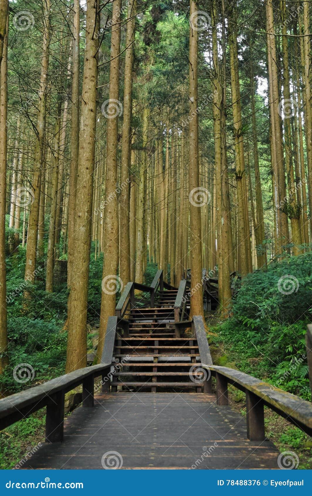 escaleras al bosque antiguo de bamb